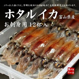 ほたるいか12杯 お刺身用 富山県産 《ref-fs1》 [[ホタルイカ]|ichijyo