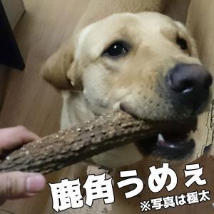 北海道産★鹿の角★犬のおもちゃ15〜25cm【送料無料】大型犬喜ぶ頑丈な犬のおもちゃ鹿角『角王(つのおう)』|ichikawa929|02