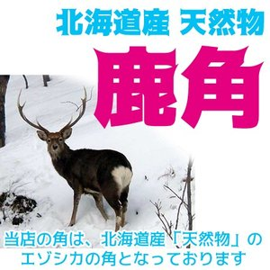 北海道産★鹿の角★犬のおもちゃ15〜25cm【送料無料】大型犬喜ぶ頑丈な犬のおもちゃ鹿角『角王(つのおう)』|ichikawa929|06