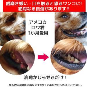北海道産★鹿の角★犬のおもちゃ15〜25cm【送料無料】大型犬喜ぶ頑丈な犬のおもちゃ鹿角『角王(つのおう)』|ichikawa929|08