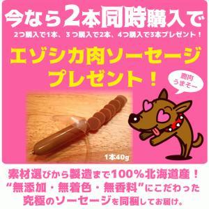 北海道産★鹿の角★犬のおもちゃ15〜25cm【送料無料】大型犬喜ぶ頑丈な犬のおもちゃ鹿角『角王(つのおう)』|ichikawa929|10