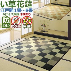 い草 カーペット ござ 8畳 八畳 IGチェック 348×3...