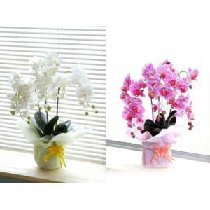 造花の胡蝶蘭★光触媒で脱臭&殺菌★鉢・ラッピング付き|ideashopshowa