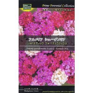 (宿根草) アルメリア シューダメリア ジョイスティック フォーミュラミックス|ideshokai