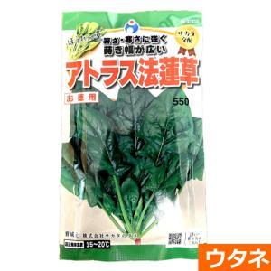 アトラスほうれん草(種)(家庭菜園 種 ほうれん草 ホウレンソウ) ideshokai