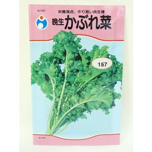 晩生かぶれ菜(種:ウタネ) ideshokai