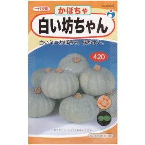 白い坊ちゃん(種:ウタネ) ideshokai
