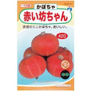 赤い坊ちゃん(種:ウタネ) ideshokai