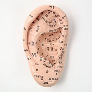 耳模型 日本語版 17cmサイズ 耳つぼ模型 耳つぼジュエリー 日本語表記