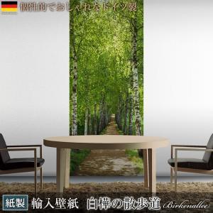 壁紙 おしゃれな輸入壁紙 クロス ドイツ製 Birkenallee 白樺の散歩道 2-1717 風景写真 景色|igogochi