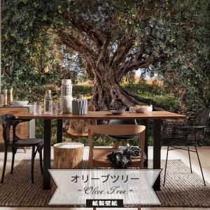 壁紙 おしゃれな輸入壁紙 クロス 紙 ドイツ製 Olive Tree オリーブツリー 8-531 風景|igogochi