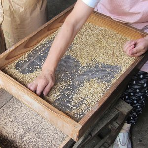 上州屋の純手炒り麦茶 ティーパック入り|iimon-ajisen|02