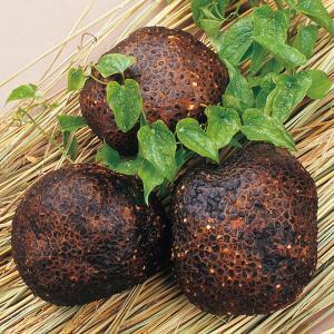 山芋 丹波ささやま 特産 山の芋 2キロ入り|iimon-ajisen