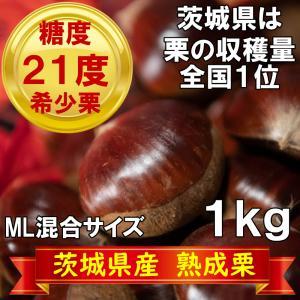 栗 熟成栗 茨城県産 和栗 1kg ML混合サイズ 無農薬 殺虫剤不使用 プレゼント 冷凍保存可能