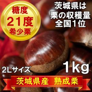栗 熟成栗 茨城県産 和栗 1kg 2L 無農薬 殺虫剤不使用 プレゼント 冷凍保存可能
