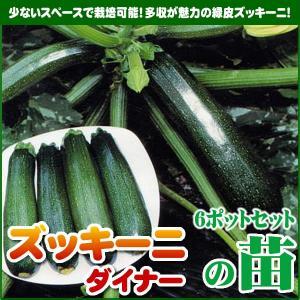 【5月下旬頃発送】野菜苗 ズッキーニ ダイナーの苗 6ポットセット|iimono-ya