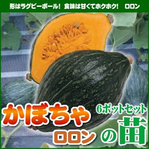 【5月下旬頃発送】野菜苗 カボチャ ロロンの苗 6ポットセット|iimono-ya