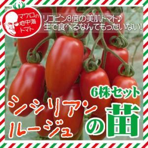 【5月下旬頃発送】マウロの地中海トマト シシリアンルージュの苗 6株セット|iimono-ya