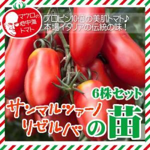 マウロの地中海トマト サンマルツァーノリゼルバの苗 6株セット|iimono-ya