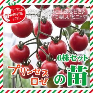 【5月下旬頃発送】マウロの地中海トマト プリンセスロゼの苗 6株セット|iimono-ya