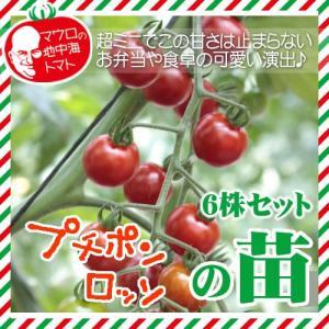 マウロの地中海トマト プチポンロッソの苗 6株セット|iimono-ya
