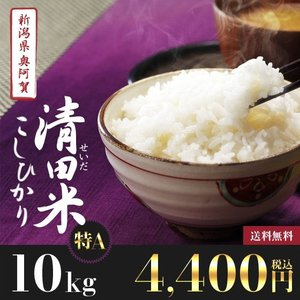 29年産 新米10kg 新潟県奥阿賀産 清田米コシヒカリ【送...