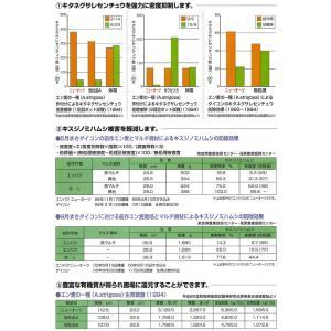 緑肥 ニューオーツ 1kg  カネコ種苗|ikedagreen|03