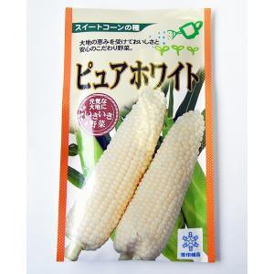 野菜種 とうもろこし ピュアホワイト 30ml 雪印種苗