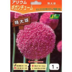 ギンガムチュームは草丈1m以上になり、草径20cmくらいの手まり状に濃藤桃色の小花を2000から30...