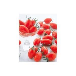 野菜種 ミニトマト アイコ 1000粒 サカタのタネ