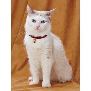 チャーム2個付の猫用アクセサリー マグネット式でかんたん取付け。 サイズはフリーになります。 首回り...