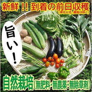 レビューで1品プラス!山陰・鳥取より!無肥料・無除草剤・無農薬 自然栽培の野菜セット(Mサイズ 7-8種類)
