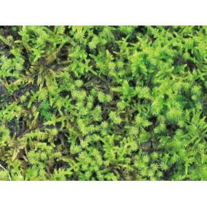 ヤシマット 緑化用混合 (砂苔+ハイ苔) HE6-TKSH interiortool