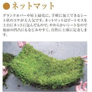 ネットマット 砂苔 HE6-TKSN interiortool 02
