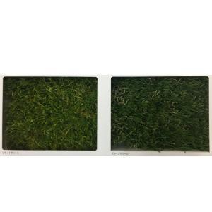 東レアムテックス 人工芝 天然芝の風合い MD-PE カット販売 幅1.8m 標準パイル長35mm 1m長|interiortool