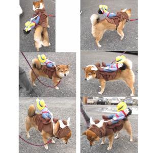 ペット 犬服 おっさんカウボーイ ロデオ(背中乗り M L サイズ) 小型犬/中型犬 ハロウィン グッズ【送料無料】セール inuya 02