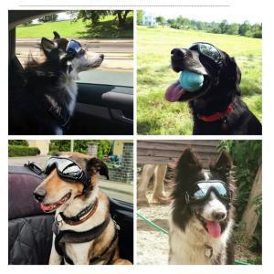 UVカット ゴーグル 本体:ブラック レンズ:ミラー アクセサリー 中型犬 大型犬用 夏 冬 サングラス 犬屋|inuya|05
