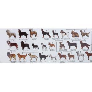 犬の系統図 ドッグジェネレーション ポスター 改定版の詳細画像2