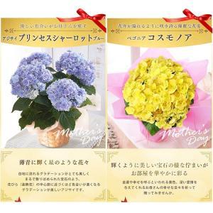 母の日 ギフトランキング プレゼント  母の日ギフト2018 花 鉢花  贈り物 アジサイ マーガレット ベゴニア (2018年母の日)(代引不可)|irisplaza|07