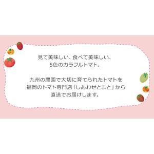 九州産 iroDori MARCHEの箱入りトマト娘 800g irodori-ma 02