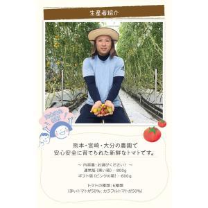 九州産 iroDori MARCHEの箱入りトマト娘 800g irodori-ma 04