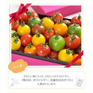 九州産 iroDori MARCHEの箱入りトマト娘 800g irodori-ma 05