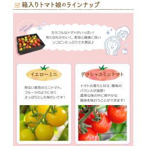 九州産 iroDori MARCHEの箱入りトマト娘 800g irodori-ma 06