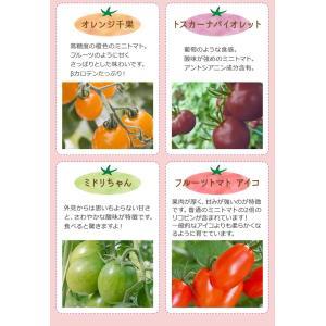 九州産 iroDori MARCHEの箱入りトマト娘 800g irodori-ma 07