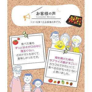 九州産 iroDori MARCHEの箱入りトマト娘 800g irodori-ma 08
