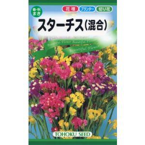 スターチス 混合種 種子 花のたね 花壇・プランター・切り花向け 家庭園芸の画像