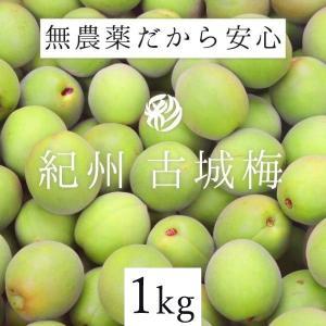 内容量 1kg 期間 数量限定。  収穫時期が大変短い希少な梅です。無農薬栽培の古城梅の青梅です。 ...