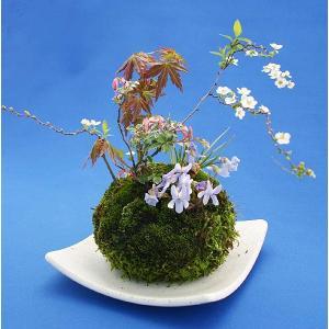 寄せ植え苔玉盆栽【受皿は付属しません】の商品画像