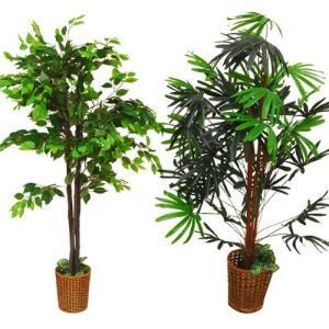 大徳商事 観葉植物2本セット|iron-peace