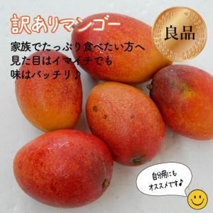 訳ありマンゴー2kg(4〜8玉) 白箱入...
